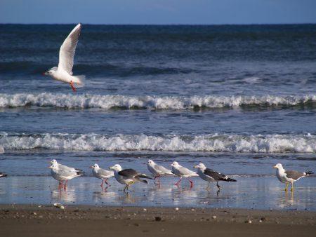 浜辺の野鳥たち